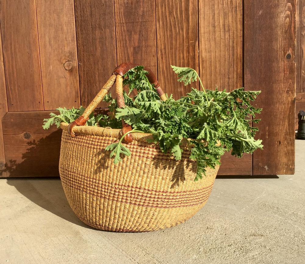 Rose Geranium Hydrosol - Wild Craft Oils - Encinitas, Ca.
