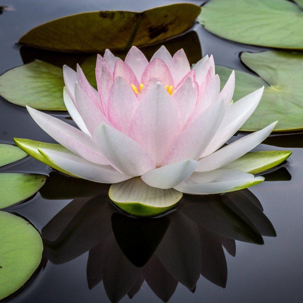 Mindfulness Meditation -