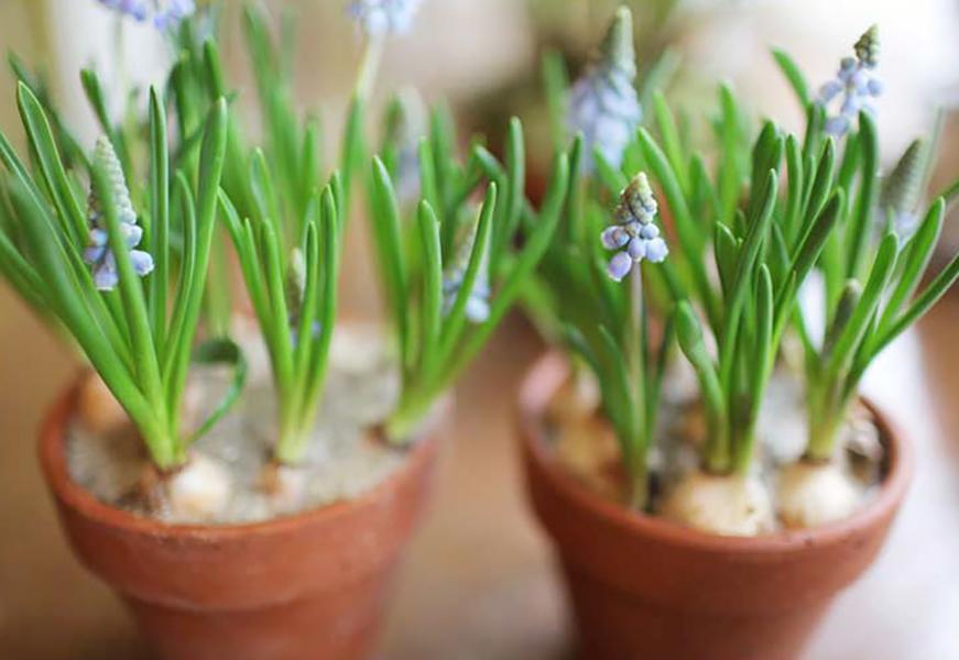 florali-Nspring94.jpg