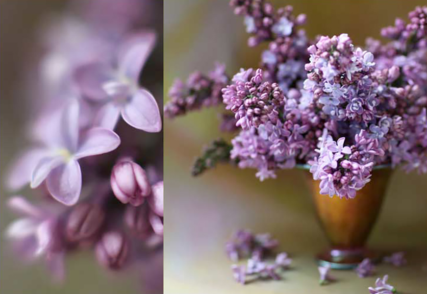 florali-Nspring95.jpg