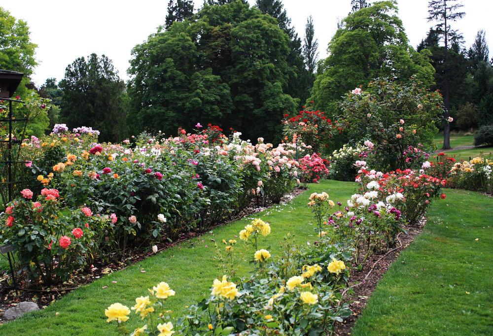 rose-garden-1154697.jpg