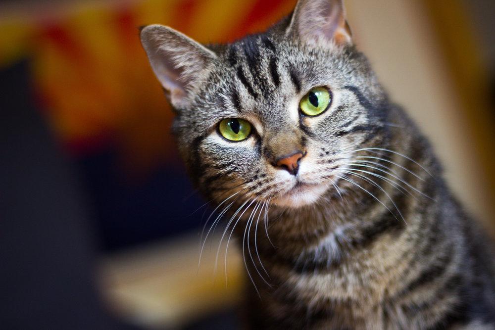 Cats (5 of 18).jpg
