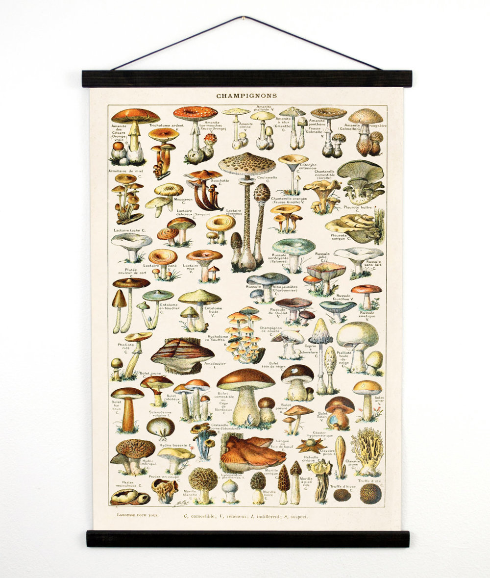Science Pull Down Chart - Ok this maybe isn't the most conventional of gifts, but if you have someone in your life who needs to sharpen up on their knowledge of mushrooms (or similar) then this is for them. Reminiscent of your old days in the classroom and ready to hang with no need for a frame, this little number is perfect for someone needing a little colour in their life.£51.48 (Shipping extra)