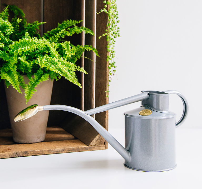 Titanium Indoor Watering Can - Remember what I said earlier about all grown ups having indoors plants?