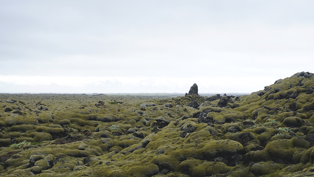 Moss covered lava field