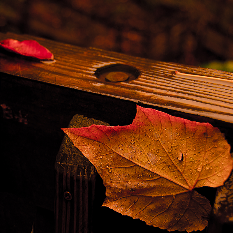 Raindrop Leaves on the Rail_CGC1893.png