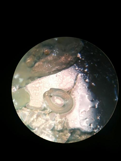 Parasite Ecology