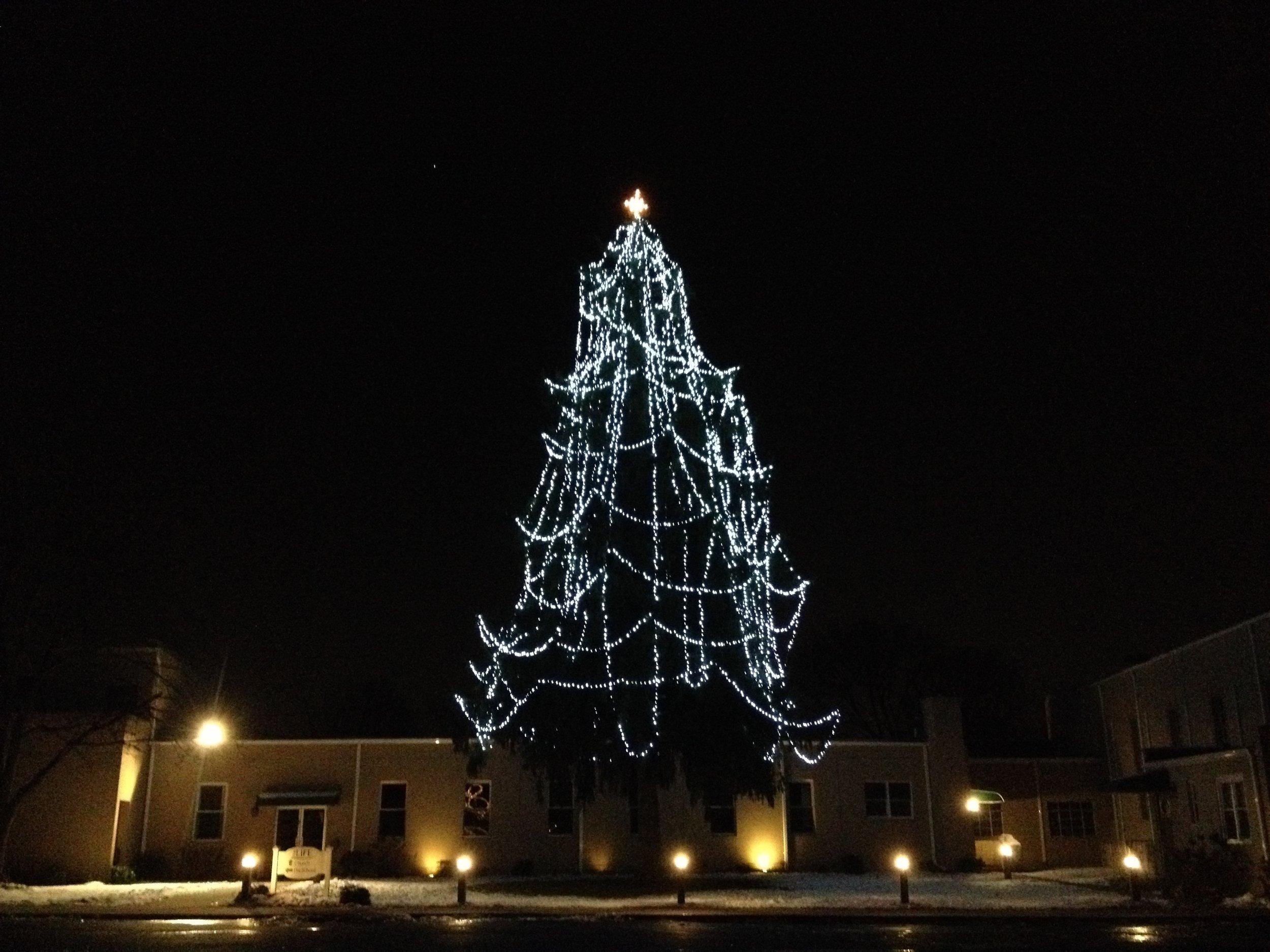Christmas Tree Lighting — THE LIFE