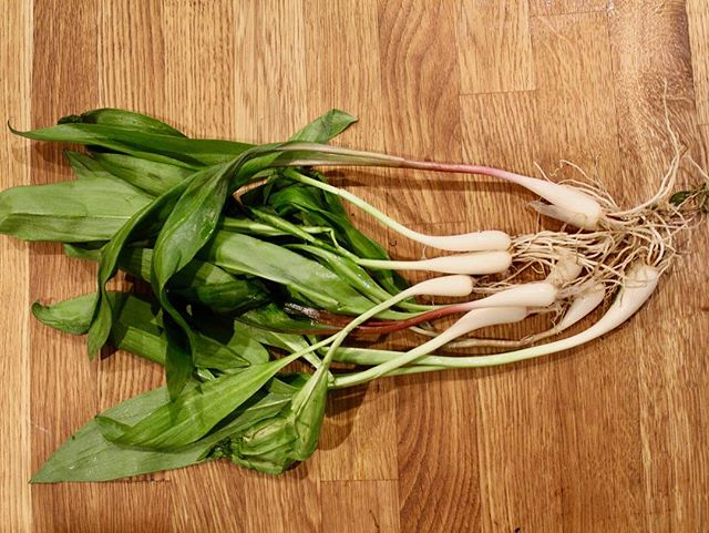 Ramps: Acquired. Now what to do with them? 🌱 . . . . . . . . . #food #foodie #food52 #foodblog #spring #vegetarian #vegan #ramps #foraging #eatlocal #healthyfood