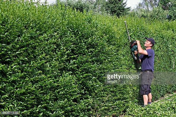Hedge Trimming& Removal -