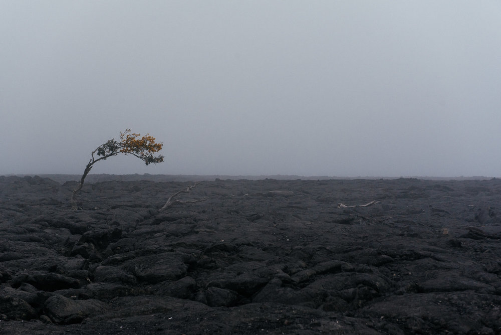 Paysage volcanique sur Big Island -  Volcanic landscape on Big Island