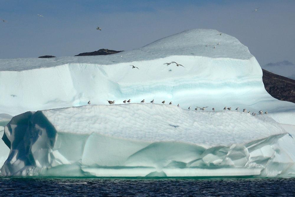 icebergs copie.jpg