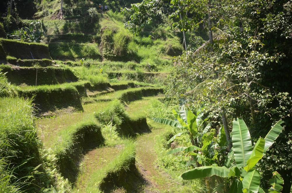 Bali-74.jpg