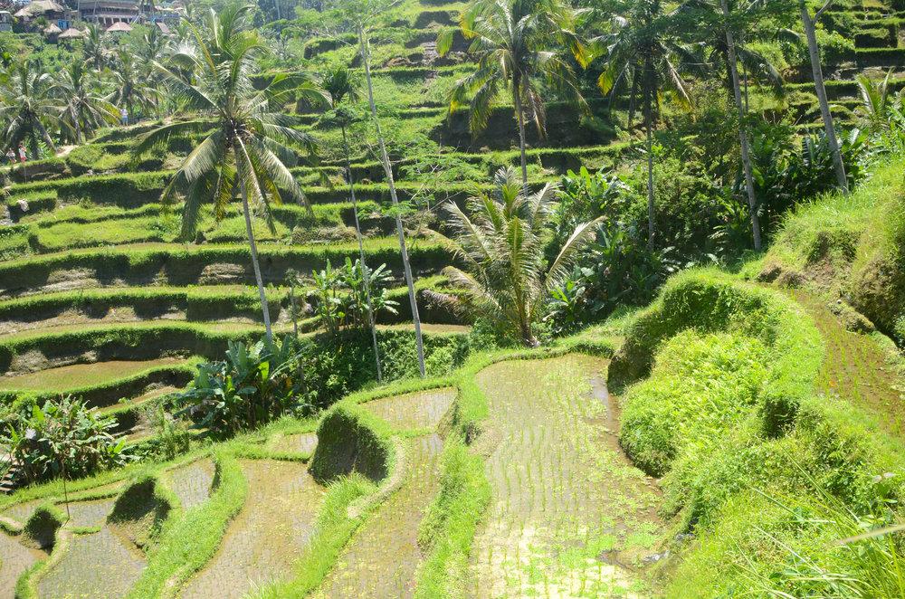 Bali-84.jpg