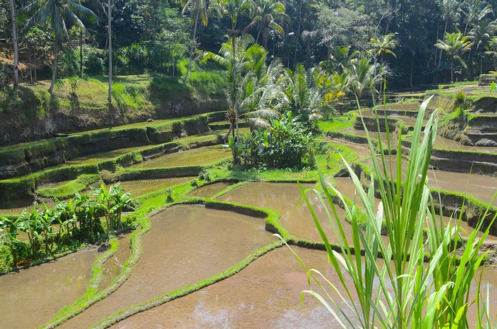 Bali-87.jpg