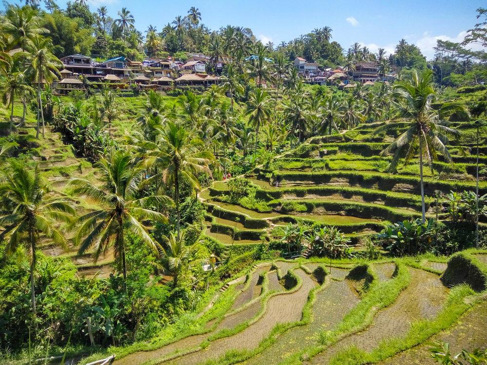 Bali-118.jpg