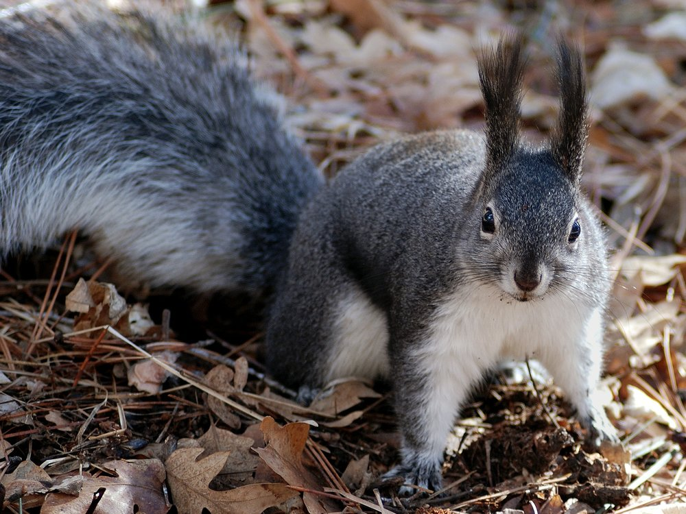 squirrel-80575_1920.jpg