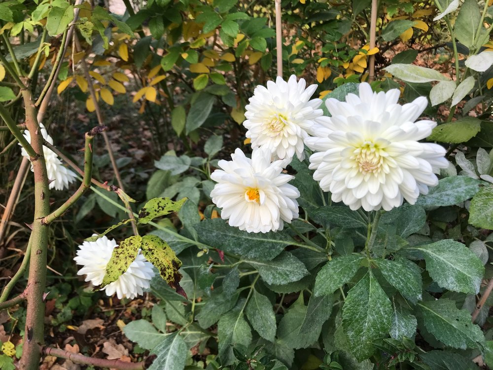 parc flowers IMG_5627.jpg