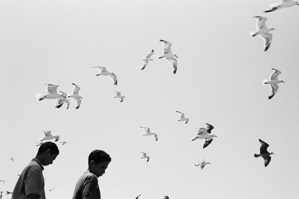 _OiseauxCeBraque1.png