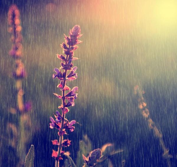 flowers_rain-600x564