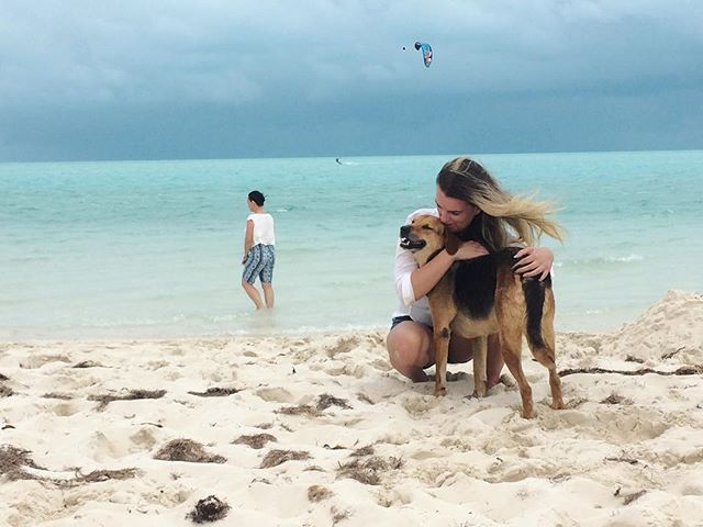 We fell in love with 3 homeless dogs today. Debated for an hour whether to sneak them back to the condo with us. If anyone has had any experience with adopting dogs and flying them home, please send me a DM #turksandcaicos #tspca #tspcaturks #adoptdontshop #longbaybeach