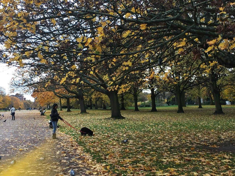 hyde-park-tour-kensington-gardens.jpg