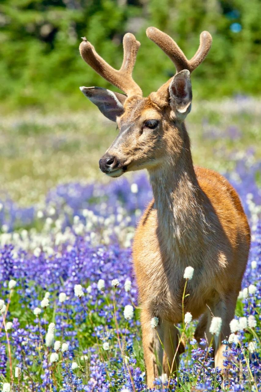Seattle Wildlife Photography