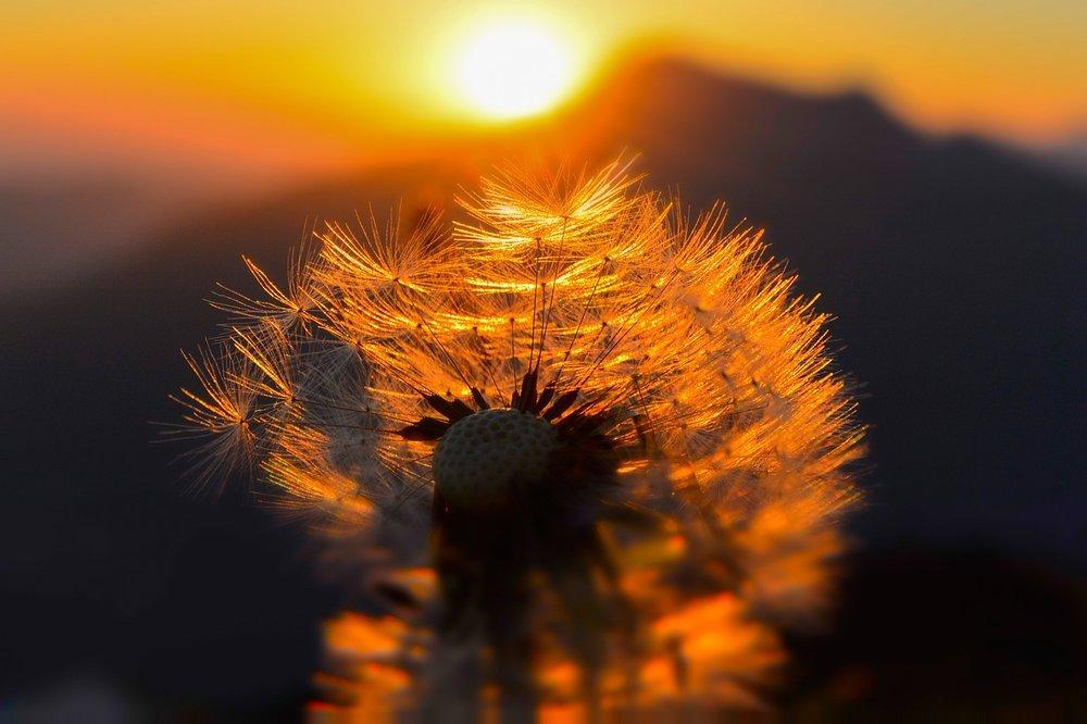 sunrise-1483431_1280.jpg