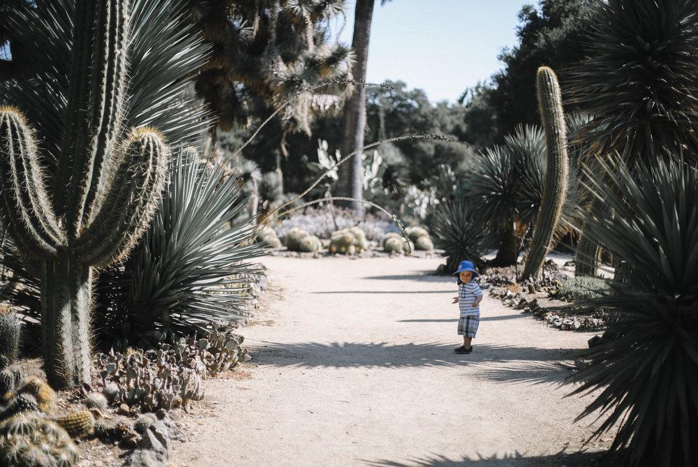 Gregory in cactus garden in Stanford, CA