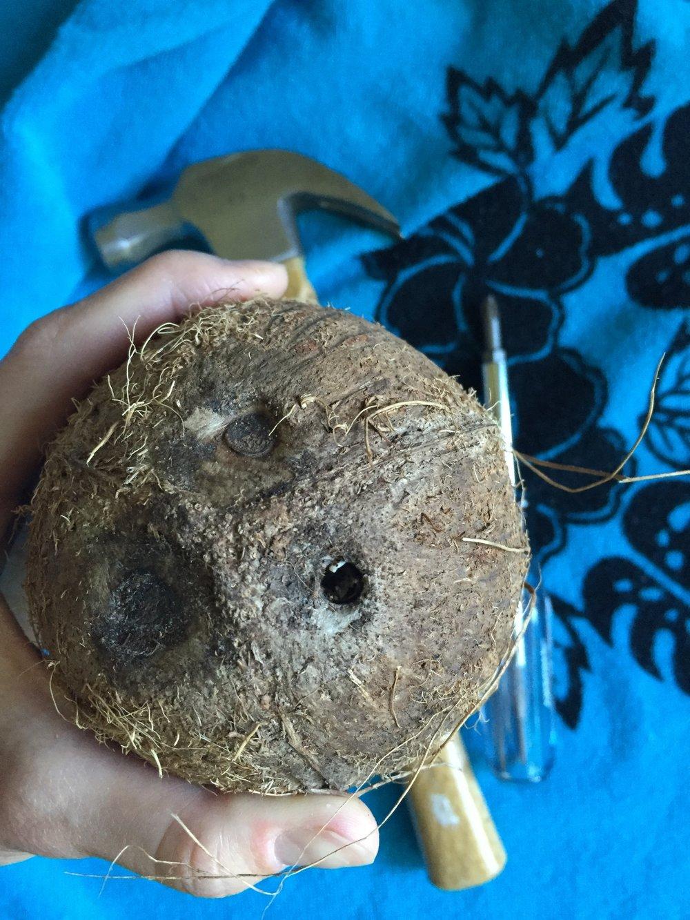 coconut_4.JPG