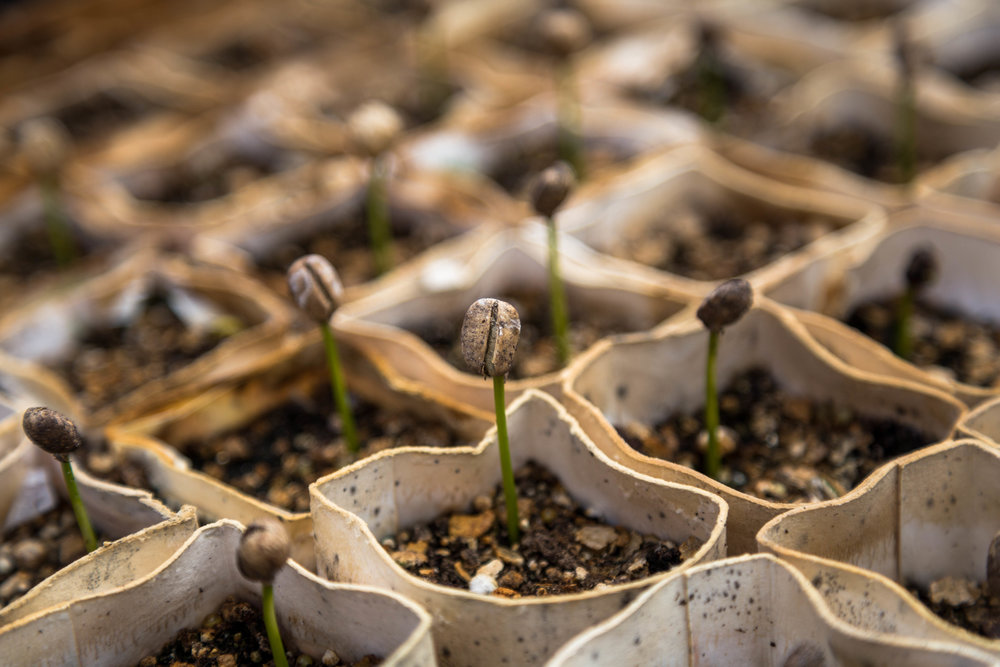The word is like a seed, and the human mind is so fertile, but only for those kind of seeds it is prepared for.
