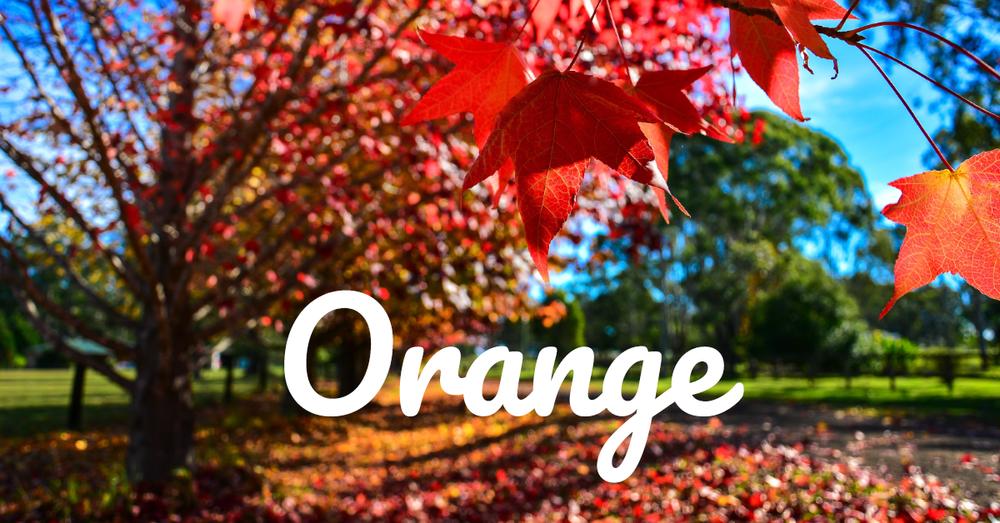 Orange-Rt.png