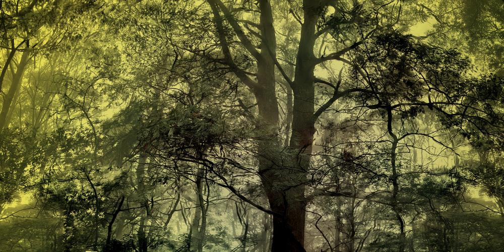 Yellow Mist - WU04