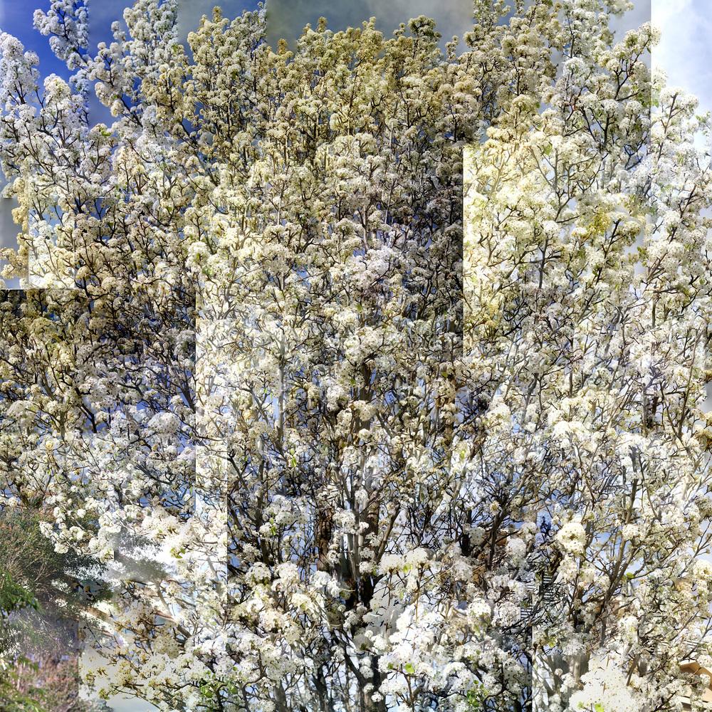 Blossom - WU19