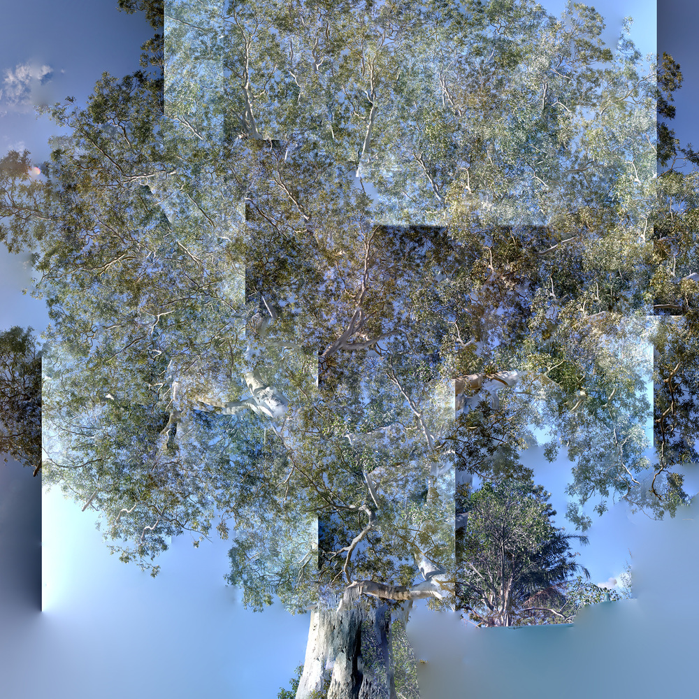 Tree - Ode to Bark - WU13