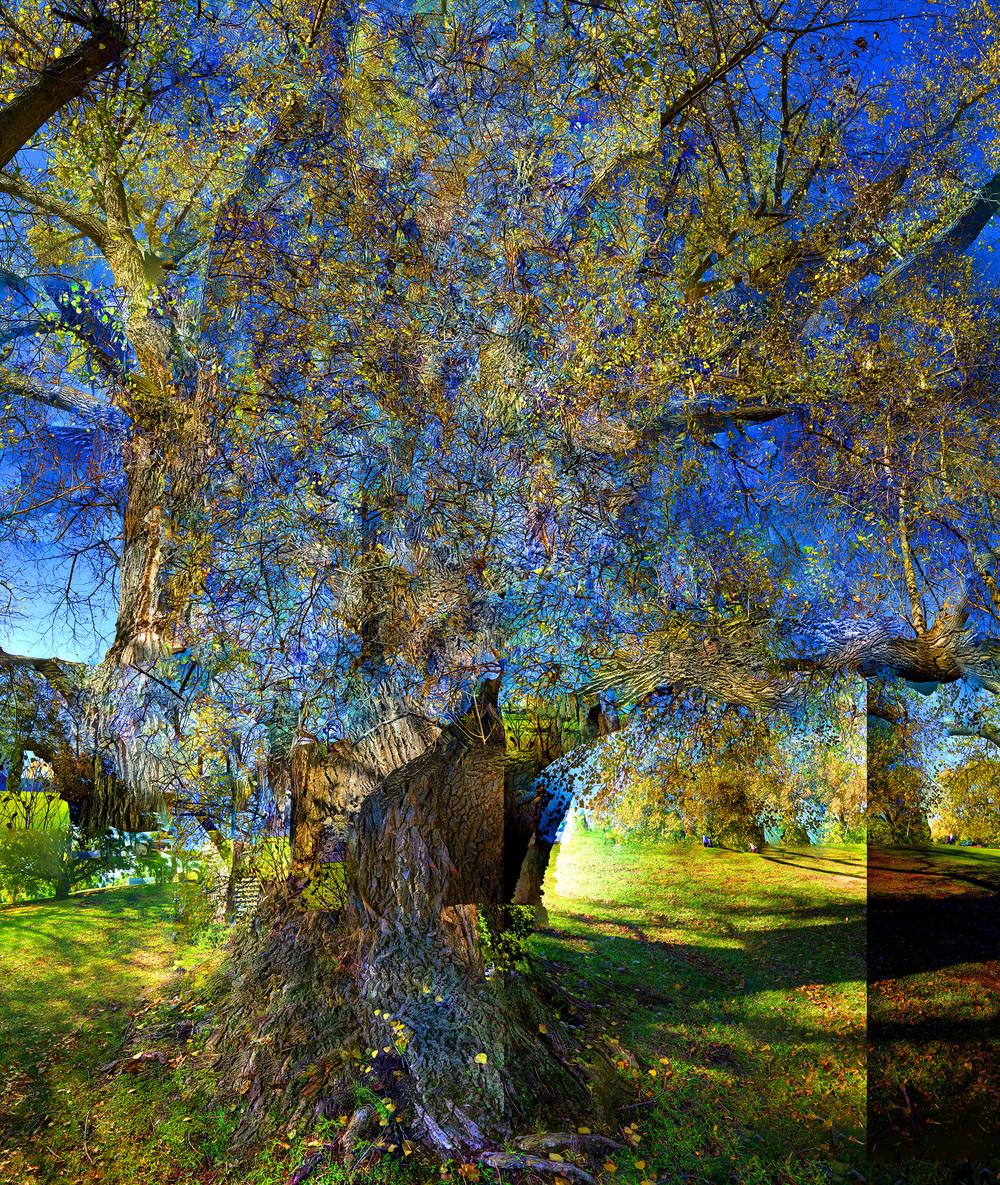 Van Gogh Park - WU05