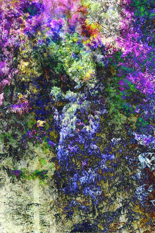 Whispering Pines - Magenta