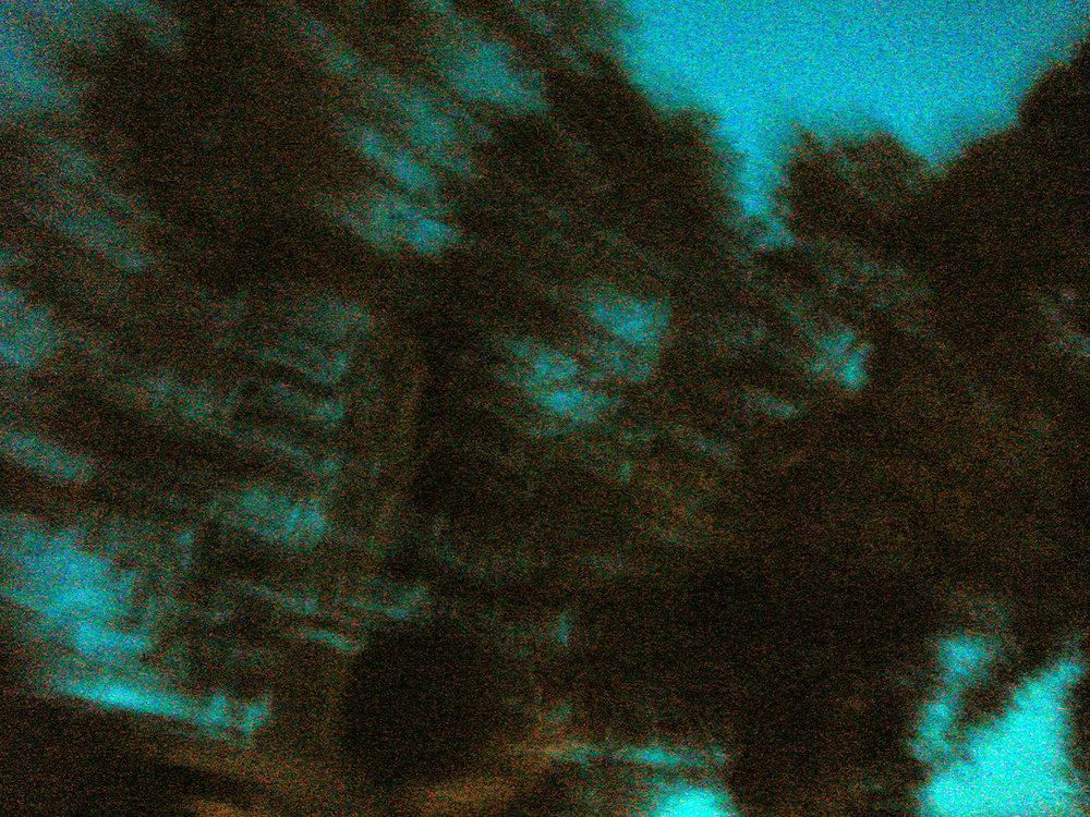 Zoom tree cyan