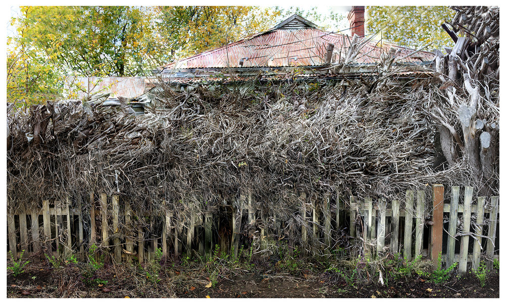Rooted Fence.jpg