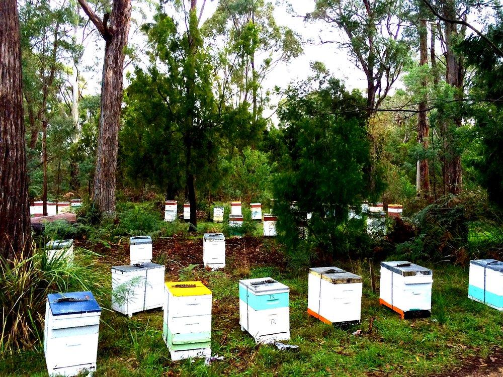 paperbeach apiary