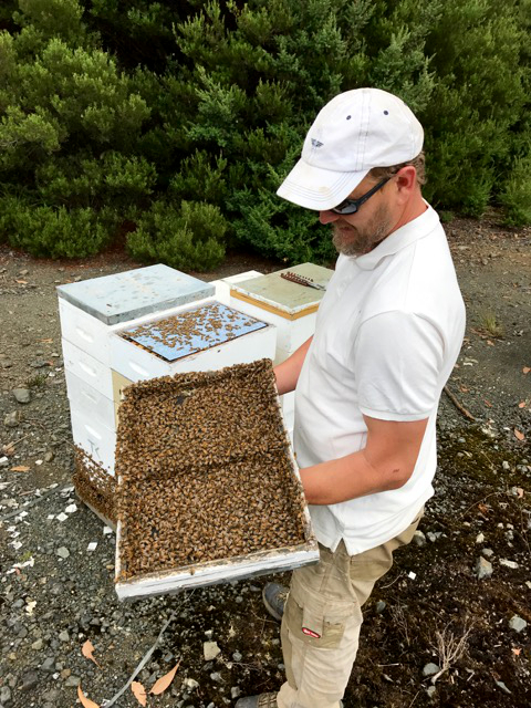 beekeeping tasmania west coast
