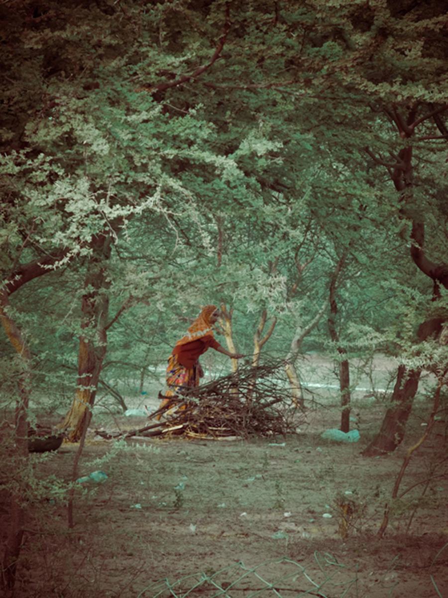gathering-firewoodFINAL.jpg