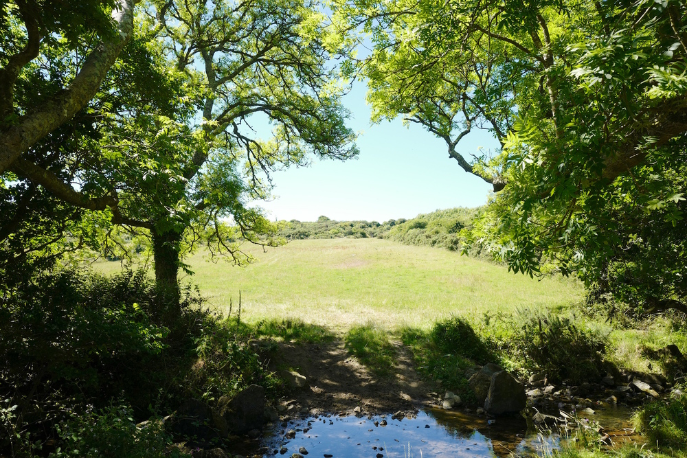 Trerise Farm meadows