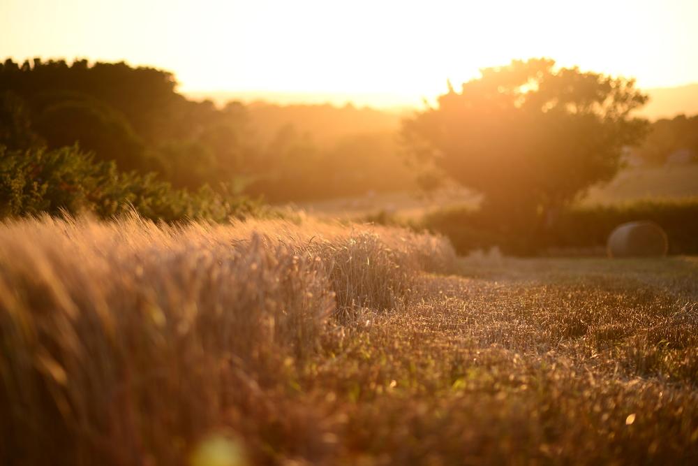 Sunset at Trerise Farm