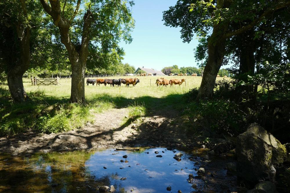 Trerise Farm meadow view