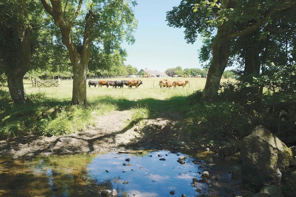 Trerise Farm location