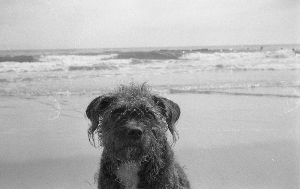 Dog portrait on the beach