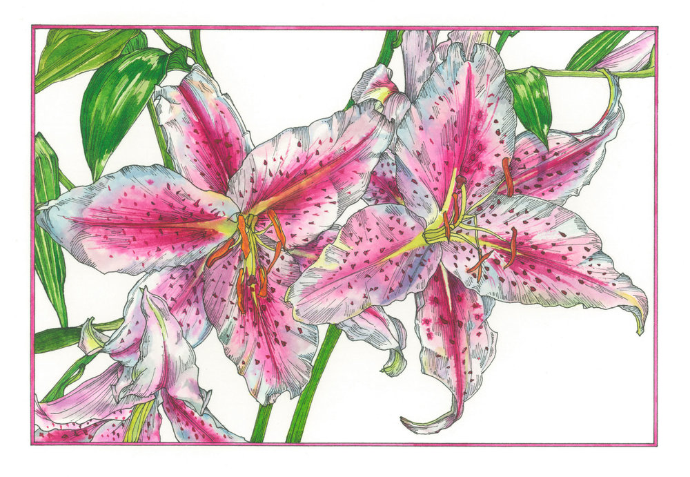 Lilies  Available as a giclee print