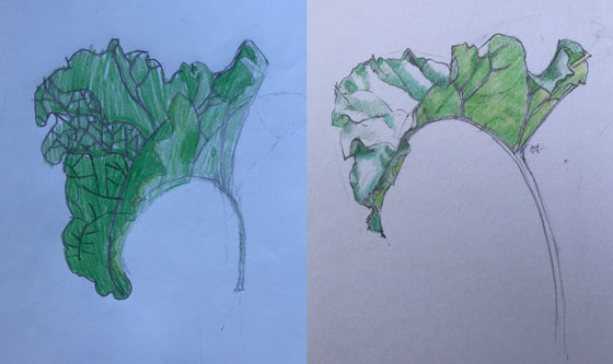 Rhubarb leaves. L's leaf left, my leaf right