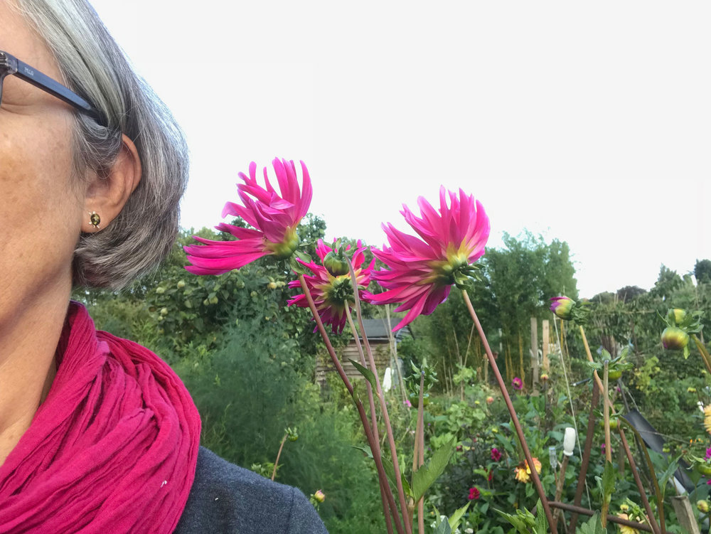 Scarf and Dahlia unexpected colour coordination